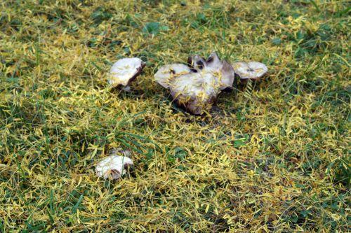 arbofolia 9 oct 2010 054.jpg