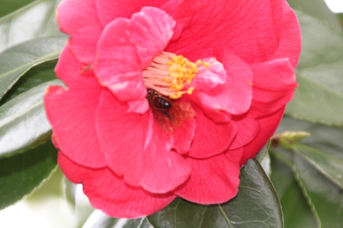 3 adolphe abeille veneux 26 mars 2016 004.jpg