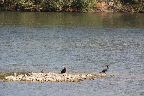 2 cormorans sorques 28 sept 2014.jpg