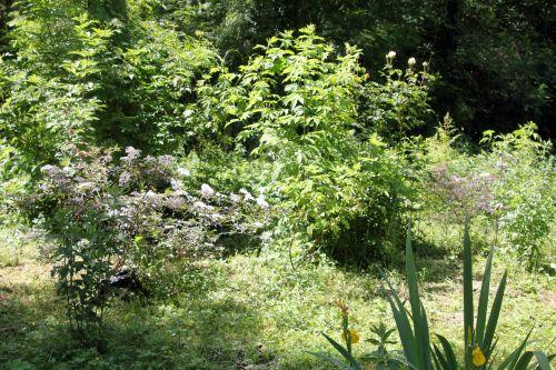 jardin,nature