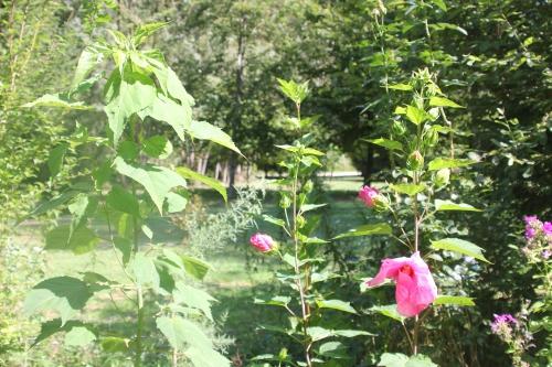 2 hibiscus planet solene romi 30 août 2015 010.jpg