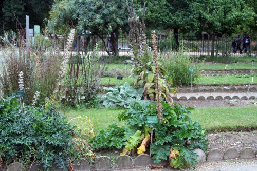 2 acanthus spi+mollis paris 26 sept 2010 320.jpg