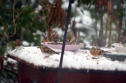 oiseaux dessus 19 déc 2010 032.jpg