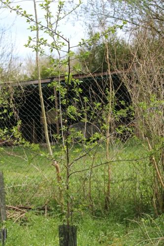3 malus sylvestris romi 15 avril 2015 096.jpg