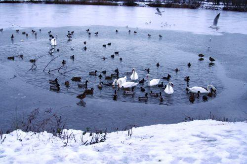 oiseaux neige 21 dec 019.jpg