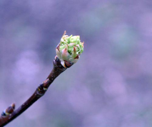nashi b à fleurs romi 30 mars 144.jpg