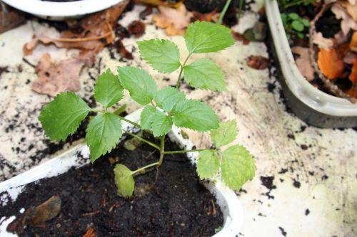nigra 31 oct 2010 001.jpg