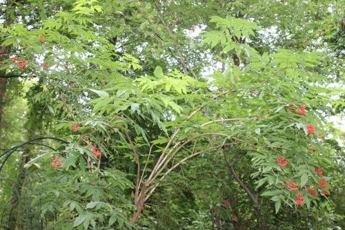 tigranii veneux 24 juin 2016 027 (3).jpg