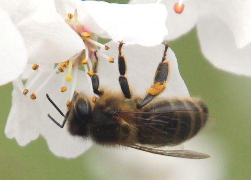 abeille paris 3 mars 2012 037.jpg