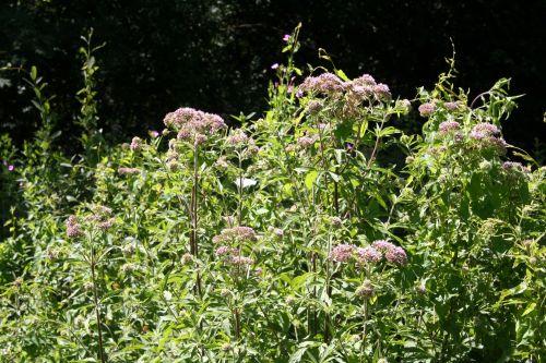 eupatoires 18 juil 2010 037.jpg