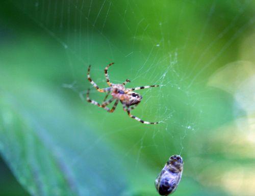 araignée approche 30 août 2008 011.jpg