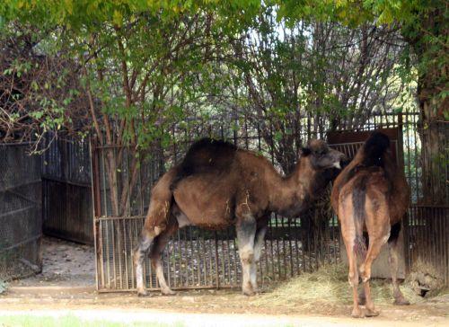 droma couple paris 30 oct 2010 268.jpg