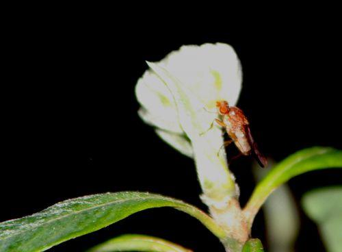 6 edgeworthia bestiole veneux 26 nov 2013 011.jpg
