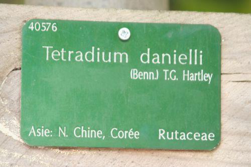 tetradium étiq paris 30 oct 2010 146.jpg