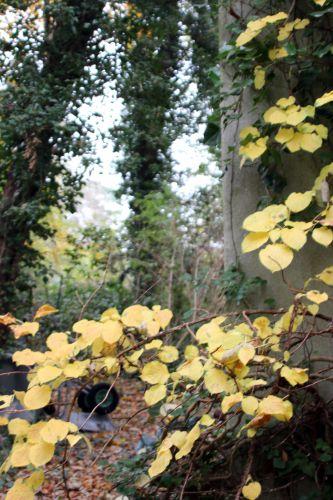 1 hydrangea petiolaris veneux 28 nov 2013 001.jpg