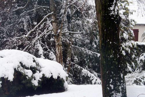 neige 20 déc 2010 045.jpg