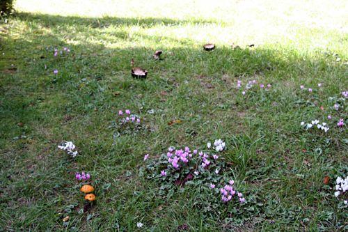 arbofolia 9 oct 2010 p 082.jpg
