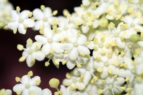 nigra fleurs paris 18 mai 153.jpg
