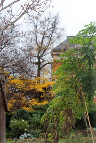 1 ginkgo dahlia imp paris 4 déc  2011 033.jpg