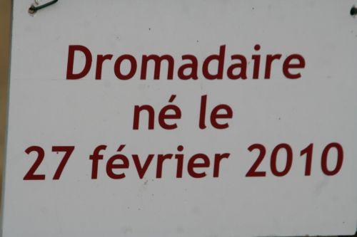 droma pancarte paris 30 oct 2010 258.jpg