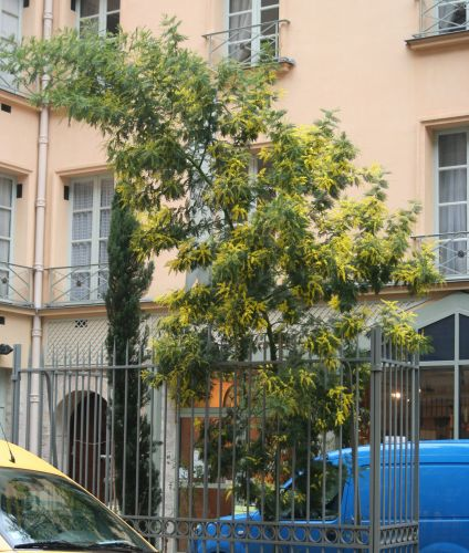 5 acacia dea 30 janv 027 (1).jpg