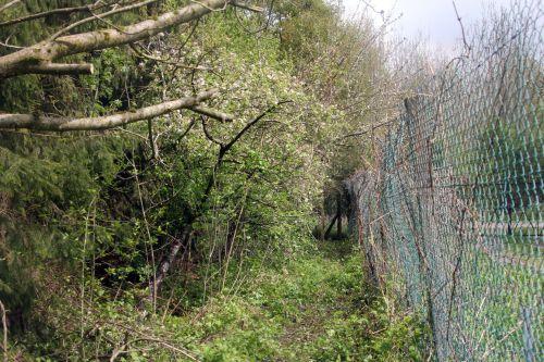 13 romi 24 avril 2012 006.jpg