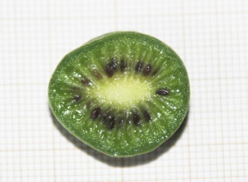 7 actinidia melanandra veneux 5 oct 2015 006 (4).jpg