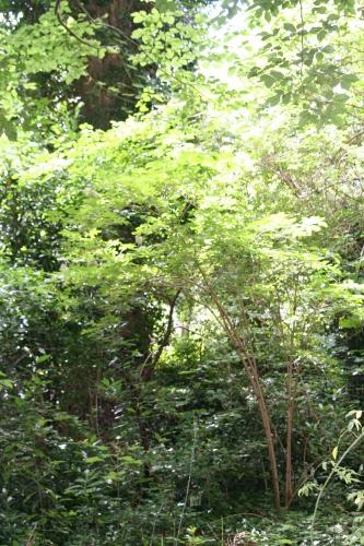 3 palmensis,ensemble 23 juin 2007 009.jpg