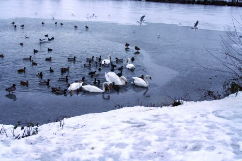 oiseaux neige 21 dec 023.jpg