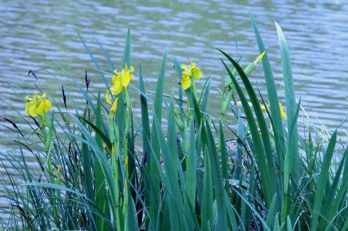 0 iris 20 mai 2008 071.jpg