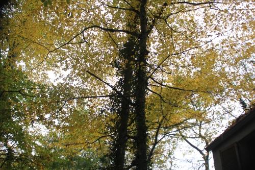6 carpinus veneux 19 nov 2014 018 (1).jpg