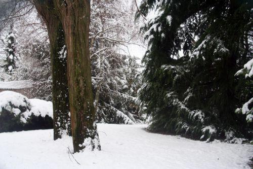 neige 20 déc 2010 047.jpg
