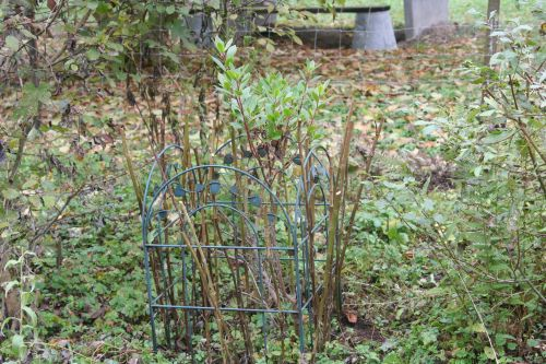 arbutus romi 24 oct 2010 019.jpg
