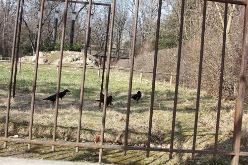 8 corneilles paris 6 mars 2015 124.jpg
