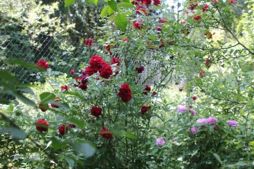 8 red parfum + inconnue romi 9 juin 2015 013.jpg