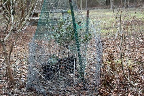 arbutus romi 16 fev 2012 049.jpg