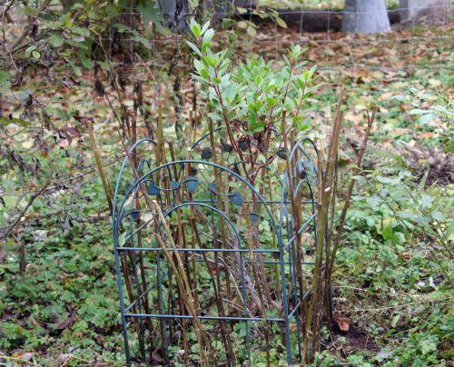 3 arbutus p romi 24 oct  2010 020.jpg