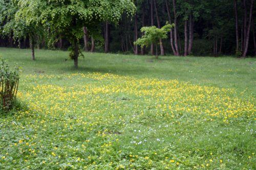 pelouse voisins 13 mai 011.jpg
