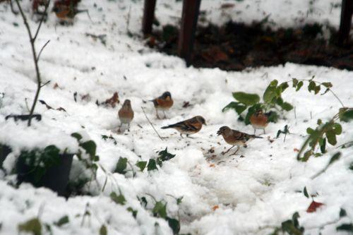 oiseaux sol 19 déc 2010 039.jpg