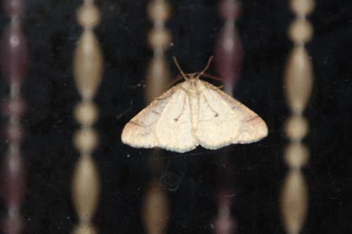 papillon veneux 18 fev 2014 003.jpg