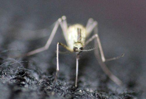 moustique romi 22 juin 2013 078 (3).jpg