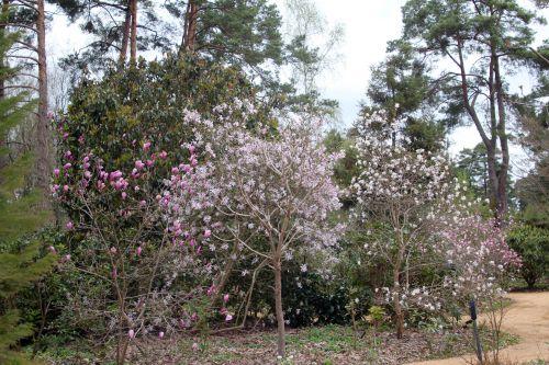 magnolias gb 9 avril 2012 187 (1).jpg