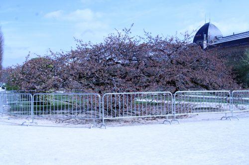 shirotae barrières paris 23 mars 131.jpg
