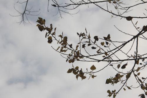2 romi 19 nov 2012 005.jpg