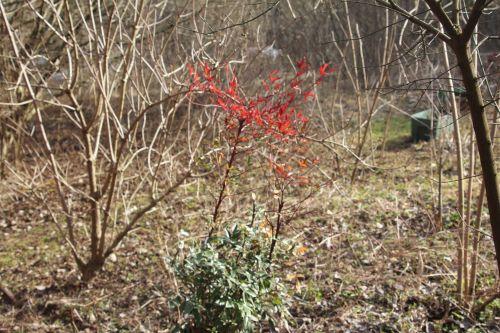 1 nandina romi 9 mars 2012 039 (1).jpg