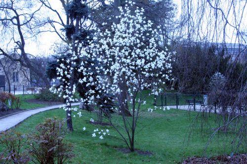 magnolia sal paris 23 mars 031.jpg