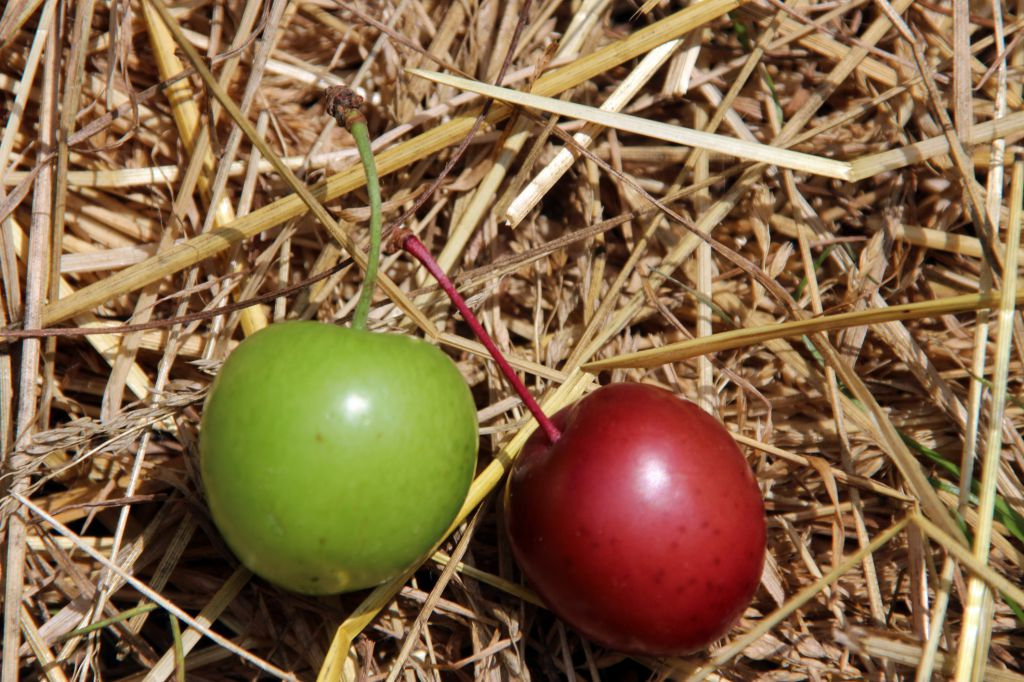the fruits of the spirit prune fruit