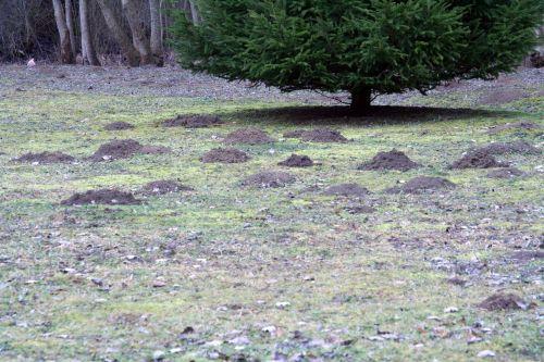 pelouse voisin 5 février 050.jpg
