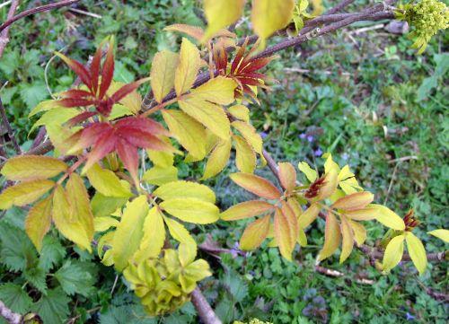 rouge plumosa 7 avril 174.jpg