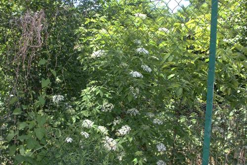 2 nigra pyr romi 4 juin 2015 024.jpg